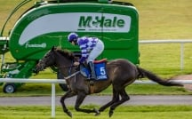 McHale Race Day 2019
